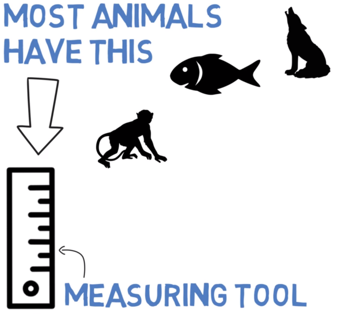 measurement-tool